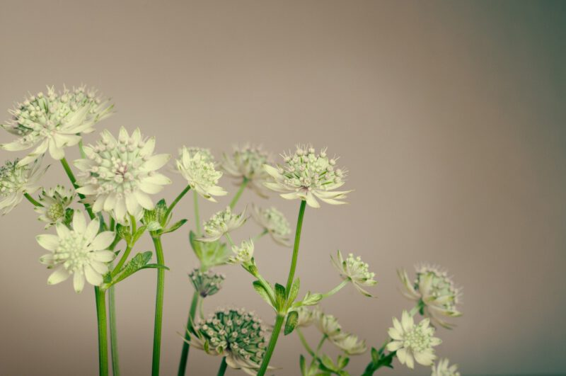 Pomocne zioła przy endometriozie!